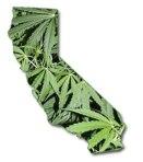 California-Medical-Marijuana-Laws